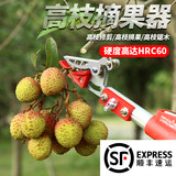 Fruit picker, fruit tree, scissors, telescopic, high-altitude, fruit picking, picking, arbutus, multi-purpose, high-cut, picking, fruit-cutting