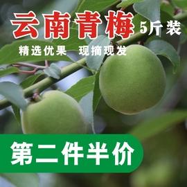 2019新鲜高原青梅酸梅果青梅泡酒酵素青梅果梅子散装5斤非10斤图片