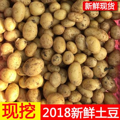 5斤山东特产农家自种黄心土豆新鲜大小迷你大土豆新鲜蔬菜马铃薯