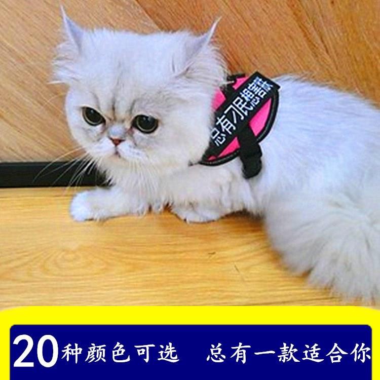 猫咪牵引绳遛猫绳子胸背带背心式防挣脱拴猫专用项圈溜兔绳小狗链