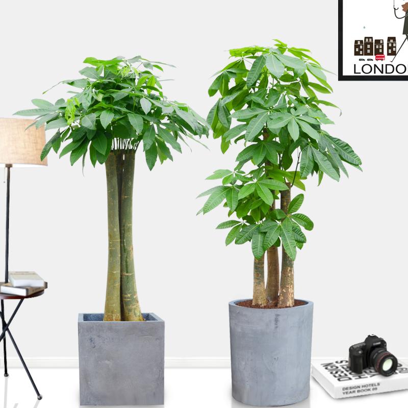 Комнатные растения Артикул 45040763961