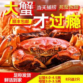 大闸蟹鲜活公蟹4.0-4.5全母3-3.5两母蟹大螃蟹现货阳登湖澄湖