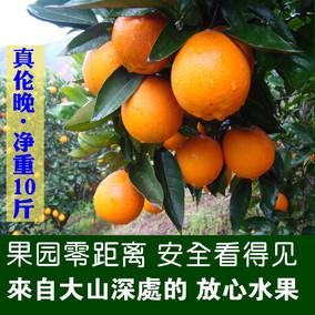 秭归春夏橙伦晚脐橙应当季新鲜水果包邮10斤橙子赛赣南甜橙冰糖橙