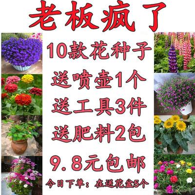 花種籽子套裝四季種開花不斷易活滿天星含羞草室內盆栽向日葵種子