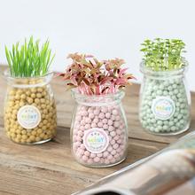 负离子小盆栽水培办公室桌面种植心形情思草爱情创意可爱迷你植物