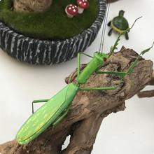仿真昆虫标本 螳螂花卉园林装饰观赏模型 环保粘土 教育教学道