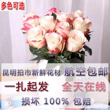 阅花 昆明鲜花速递基地直发玫瑰一扎直发包邮全国红黄蓝粉玫瑰