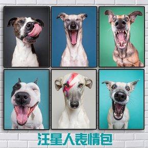 新品可爱狗狗表情包现代装饰画宠物店挂画有框画客厅沙发背景墙