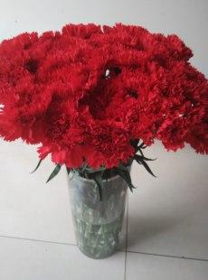 家庭鲜花单只康乃馨批发鲜花速递(同城)可包月鲜花一月送4次