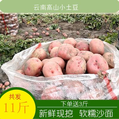 云南新鲜小土豆10高山农家自种土豆11斤包邮小洋芋黄心小土豆