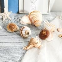 海螺贝壳饰品工艺品面包螺水族箱鱼缸造景海星摆件创意装饰沙滩