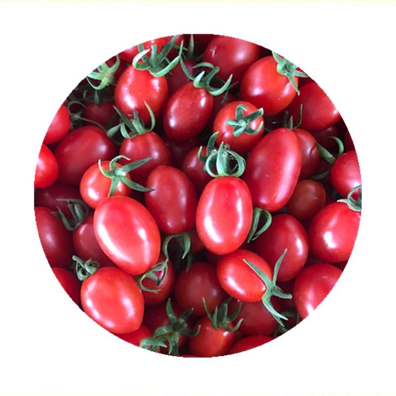圣女果 新鲜包邮五斤樱桃小番茄西红柿孕妇儿童水果无公害自然熟