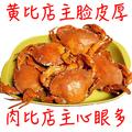 海螃蟹鲜活大