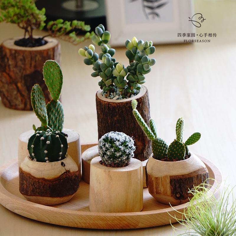 香樟木花盆