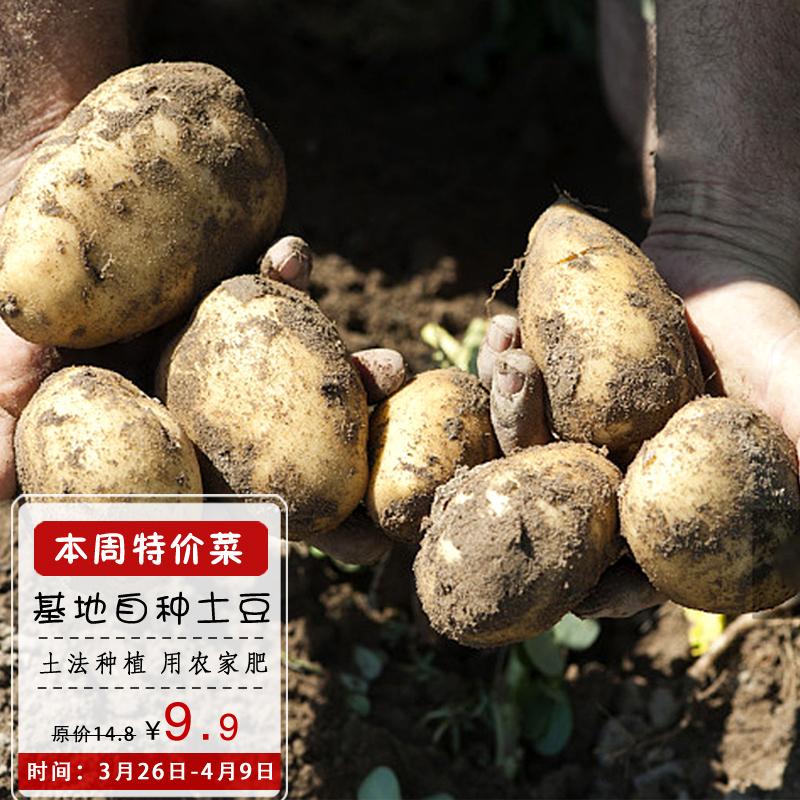 新鲜土豆马铃薯农产品农家洋芋新鲜蔬菜黄心土豆600克