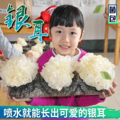銀耳食用菌種包菌棒陽臺辦公室家庭趣種植蘑菇菌包菌種種植包郵