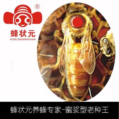 蜂状元 邱汝民 意蜂 蜜浆老王蜂王种王 蜜蜂活体种高产王