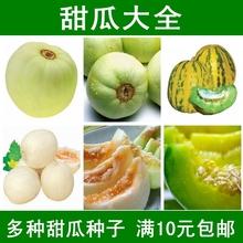 甜瓜种子香瓜种子薄皮超甜脆香四夏春季早熟绿宝石羊角酥日本甜宝