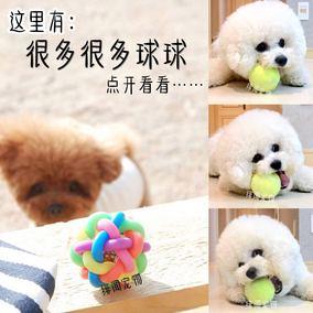 """""""球""""的集合 狗狗喜欢玩球球 宠物狗狗玩具球 我不贵 但我好玩"""
