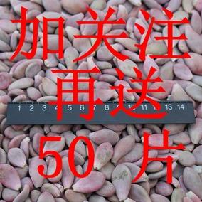 美子多肉植物桃蛋叶片 19.9元50片包邮再送50片 一组100片