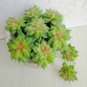 小露莲仿真多肉植物 假肉肉绿植 zakka家居客厅画框植物墙装饰花