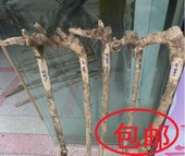 小叶黄杨木拐杖料 龙头拐杖料 黄杨木根雕 手把件 小叶黄杨原木料