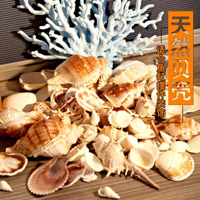 天然海螺贝壳鱼缸水族箱造景装饰品寄居蟹套装小礼物地台摆件拍照