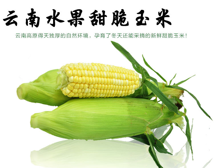 云南特产新鲜水果玉米 甜玉米新鲜玉米棒农家绿色食品包谷5斤包邮