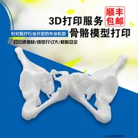 3D打印模型定制服务|牙齿3D打印光敏树脂打印|医疗模型教具骨骼