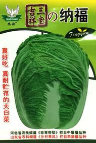 腾翔系列大白菜种子老品牌 北方秋天专用 冬储大白菜 口感好