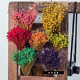 Natural small star flower art dried flower branches fresh home decoration display bouquet shooting props