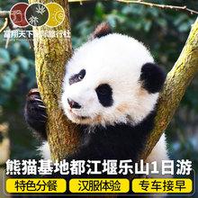 四川成都大熊猫基地一日游纯玩 都江堰黄龙溪乐山大佛1日跟团旅游